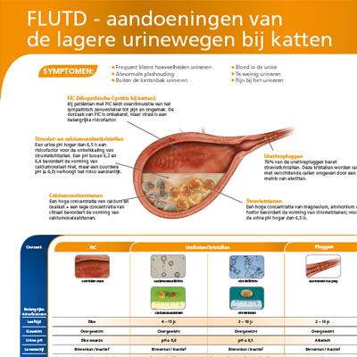 FLUTD poster Canine – New product information